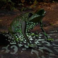 Metal Silhouette Frog Solar Light