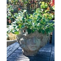 Vienna Vase Stone Head Planter