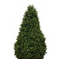 Artificial Topiary Boxwood Tower Tree - Small 105cm